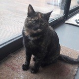 Odile, Chat à adopter