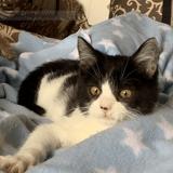 Patsy, Chaton à adopter