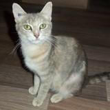 Plume, Chat européen à adopter