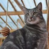 Iota, Chat à adopter