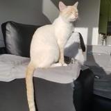 Oksa, Chaton à adopter