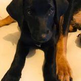 Orka, Chiot à adopter