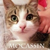 Mocassin grand chaton très doux, Chaton à adopter