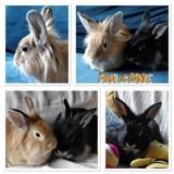 Pika et dante, Animal à adopter