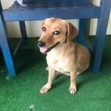 Scarlett (réservée), Chien à adopter