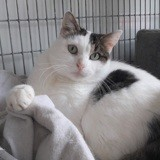 Mousse, Chat à adopter