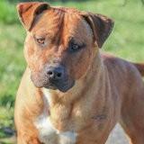 Tyson, Chien à adopter