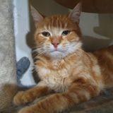 Marlon, Chat à adopter