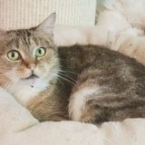 Becky, Chat à adopter