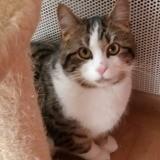 Bailey, Chat gouttière à adopter