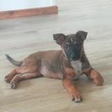 Pimie (réservée), Chiot à adopter