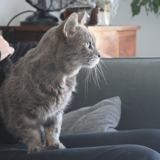Sony, Chat gouttière à adopter