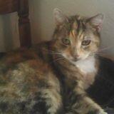Fushia, Chat à adopter