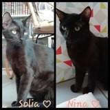 Nina et solia, Chaton à adopter