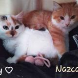 Joy et nazca, Chaton à adopter