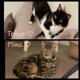 Tokyo et mina, Chaton à adopter