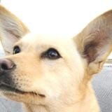 Miaa, Chiot à adopter