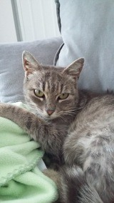 Lila, Chat à adopter