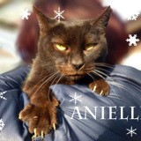 Anielle adorable senior, Chat à adopter