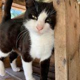 Bonny, Chat à adopter