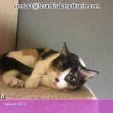 Louna, Chat à adopter