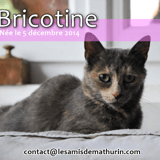 Bricotine, Chat à adopter