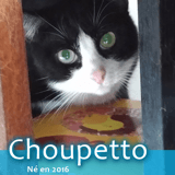 Choupetto, Chat à adopter