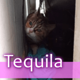 Tequila, Chaton à adopter