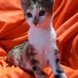 Payette, Chaton à adopter