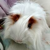 Elvis, Animal à adopter