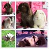 Mushu et minifilia, Animal à adopter