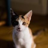 Juno, Chaton à adopter