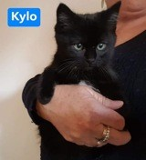 Kylo, Chaton à adopter