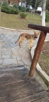 Luna, Chiot à adopter