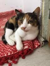Amalia, Chat à adopter