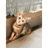 Plume, Chaton à adopter