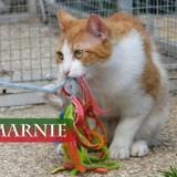 Marnie la copine de jeu, Chat à adopter