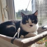 Lardy, Chat européen à adopter