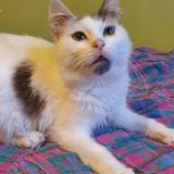 Palermo coryza chronique, Chaton à adopter