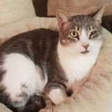 Mickael, Chat à adopter