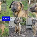Punch, Chiot à adopter