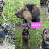 Purple, Chiot à adopter