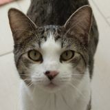 Pom, Chat à adopter