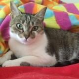 Neya, Chat européen à adopter