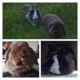 Barney et kami, Animal à adopter