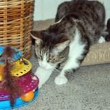 Grimper très joueur, Chat à adopter