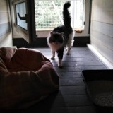 X, Chat à adopter