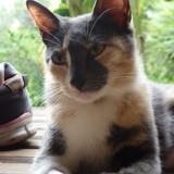 Naau (réservé), Chat à adopter