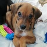 Django, Chiot à adopter