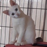 Pastille, Chaton à adopter